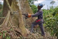Congo_12_11_09_McConnell_deforestation9_edit.jpg